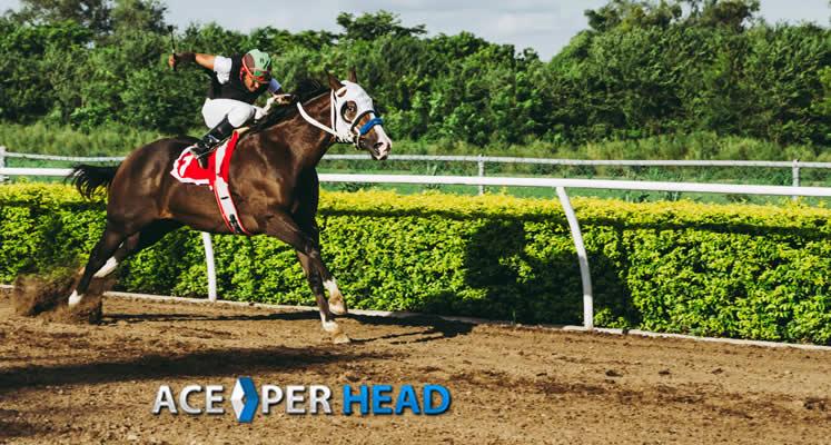 apuestas caballos software